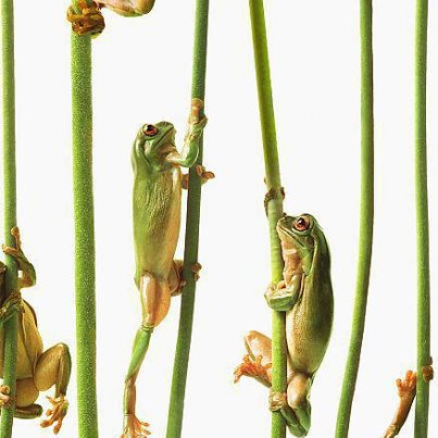 Die Geschichte vom Frosch